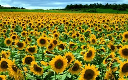 kwiaty świata